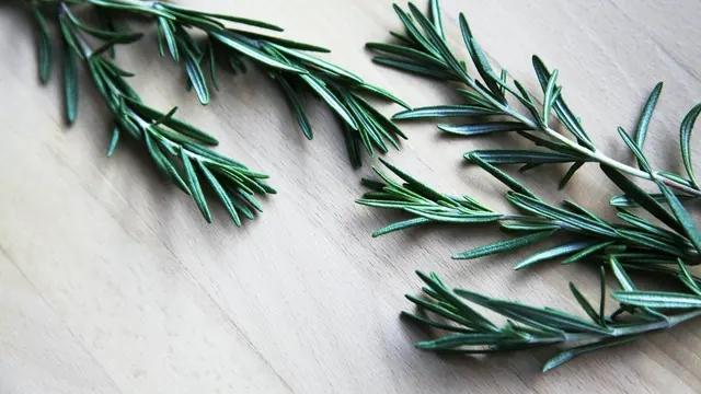 Tak Cuma Jadi Aromaterapi, Ini Manfaat Rosemary untuk Kesehatan