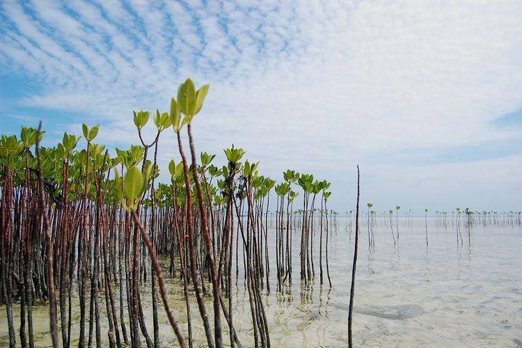 Hutan Mangrove Indonesia Tertinggi di Dunia Mengalami Kerusakan